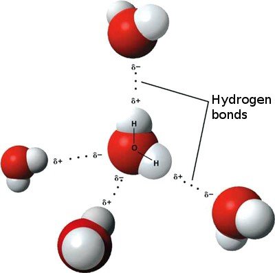 hydrogen bond in water